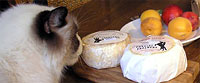 The Cheese Kitty Inspects